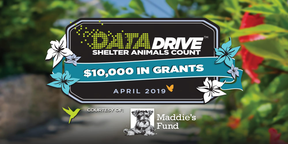 Shelter Animals Count | Data Drive Results